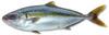 Smalfish1